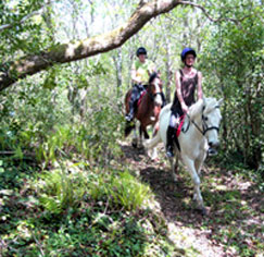 Horse trekking in Kerry
